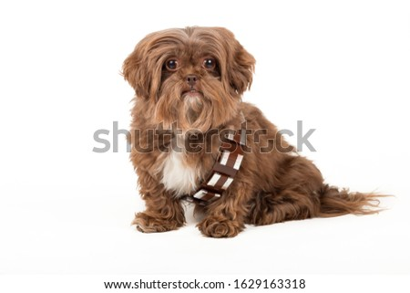 Cute adorable small puppy background Royalty-Free Stock Photo #1629163318