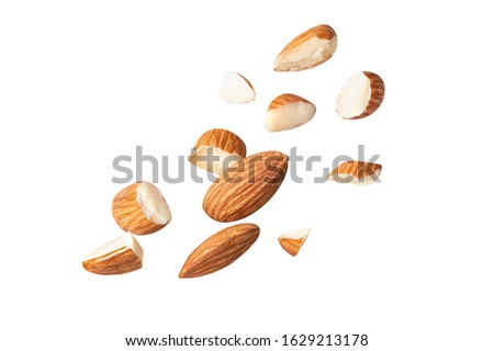 full almond fly on white isolated with clipping path