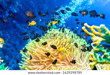 Underwater coral fish shoal view. Underwater coral fishes close scene. Underwater world