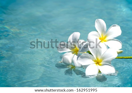 frangipani spa flowers over shiny water background-14