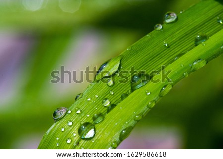 Drops of water on the grass, after a summer rain moisture condensed from the atmosphere that falls visibly in separate drops. #1629586618