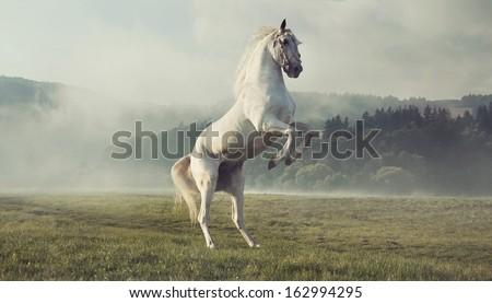Wild white horse #162994295