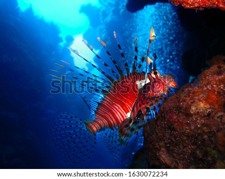 Underwater photography collection inn the Red Sea, Egypt.