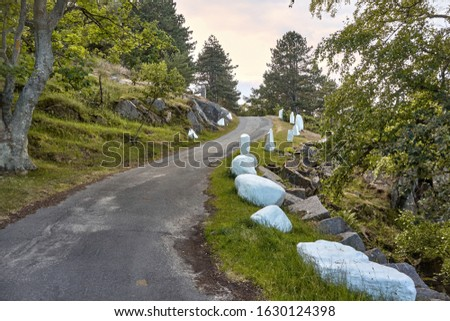 Narrow winding road with white painted stones on the side leading to the tip of northernmost coast of Bornholm island, Denmark.