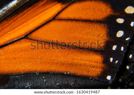 Macro shot of a Monarch butterfly wing texture. Royalty-Free Stock Photo #1630419487