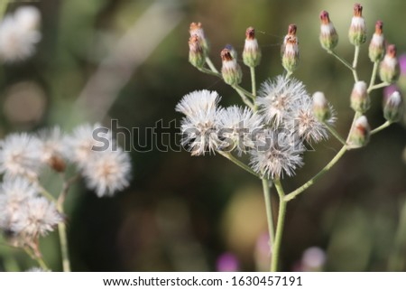 portrait photography of white spring flowers on spring time in thar forest with springs backgrounds #1630457191