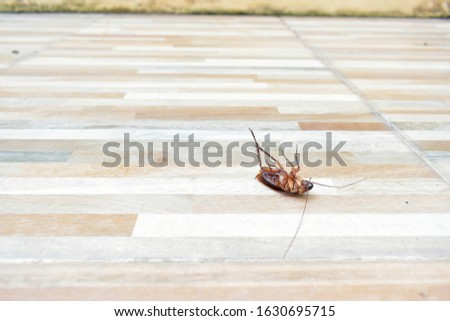 one creepy cockroach dead on floor with insecticide killing #1630695715