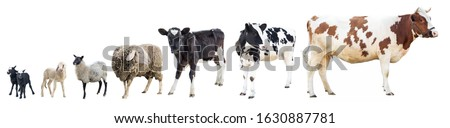 Farm animals on a white background, farm animals, farm, cows, sheep #1630887781