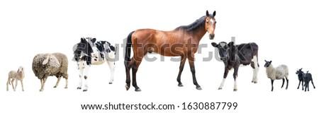 Farm animals on a white background, farm animals, farm, cows, sheep,horse #1630887799