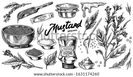 Mustard seeds and plant set. Spicy condiment, seasoning bottle, packaging and leaves, wooden spoons, sauce in gravy boat, whole and ground grains. Vintage background poster. Engraved hand drawn sketch #1631174260