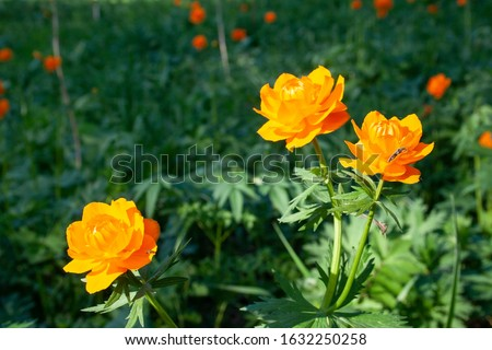 Beautiful spring flowers in the forest. Spring flowering meadows. Forest of brightly coloured flowers. Beautiful spring flowers in the forest. Spring flowering meadows. Forest of brightly coloured flo #1632250258