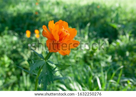 Beautiful spring flowers in the forest. Spring flowering meadows. Forest of brightly coloured flowers. Beautiful spring flowers in the forest. Spring flowering meadows. Forest of brightly coloured flo #1632250276