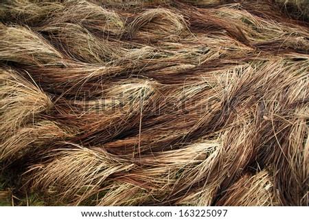 autumn dry grass sedge #163225097
