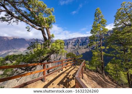 Pine forest at Caldera de Taburiente National Park. Viewpoint La Cumbrecita, La Palma, Canary Island, Spain. Royalty-Free Stock Photo #1632326260