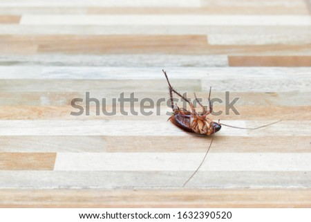 one creepy cockroach dead on floor with insecticide killing #1632390520