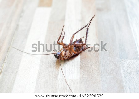 one creepy cockroach dead on floor with insecticide killing #1632390529