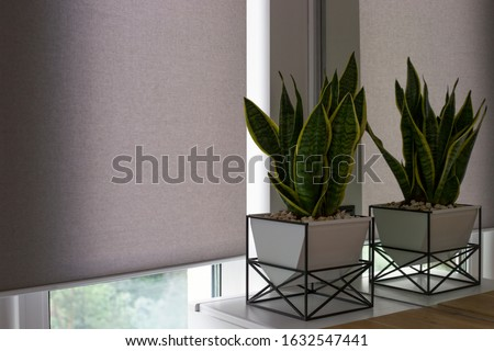 Motorized roller shades. Automatic blinds on the window. A houseplant in a modern pot stands on the bedside wooden table next to roller shades. Roller blinds are made from texture material. Royalty-Free Stock Photo #1632547441