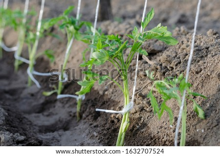 Growing bio vegetables in the northern Bulgaria #1632707524