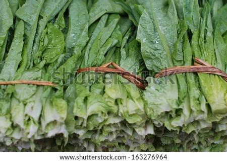 Lettuce #163276964