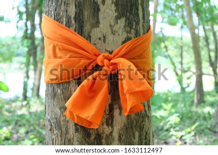 The monk's cloth is used to tie trees as a symbol of forest and environmental conservation. #1633112497