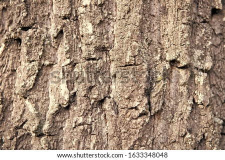 Rough and dry. Tree trunk. Tree bark texture. Tree stem cover closeup. Mature tree covered with moss. Woody plant. Forest nature. Natural background. #1633348048