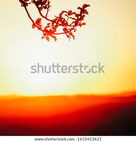 Colourful vivid shot of a sunset, nature background. #1633423621