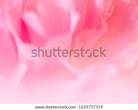 Soft flowers in soft style. Beautiful Flowers on soft sparkle in soft focus with filter colors use for Love and Valentine's Day, wedding and love Concept background. Vintage flowers. #1633737319