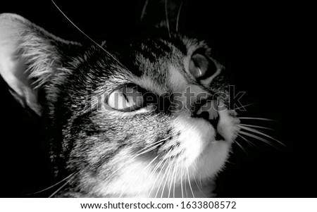 Photo Of A Black Cat. #1633808572