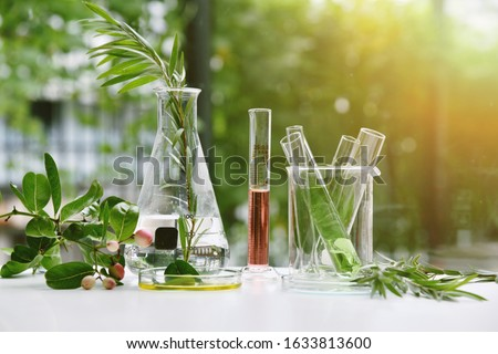 Natural drug research, Natural organic and scientific extraction in glassware, Alternative green herb medicine, Natural skin care beauty products, Laboratory and development concept. Royalty-Free Stock Photo #1633813600