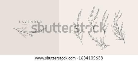 Lavender logo and branch. Hand drawn wedding herb, plant and monogram with elegant leaves for invitation save the date card design. Botanical rustic trendy greenery vector illustration Royalty-Free Stock Photo #1634105638