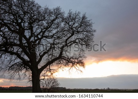 old majestic oak tree in winter #1634110744
