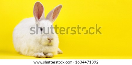 a small white rabbit on a pastel yellow background, an Easter Bunny for Easter. Photo banner with a place for your unique text