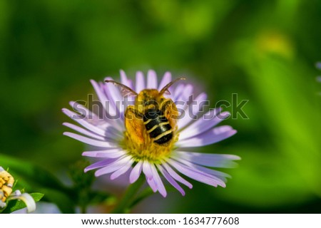 The name Aster comes from the Greek word ἀστήρ, which means the star, which means the shape of the flower head. Varieties are popular as garden plants because of their attractive and vibrant colors #1634777608