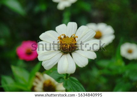 top best white pink red cosmos aster flowers for home gardening easy to growth up blooming blossom high resolution detail photography