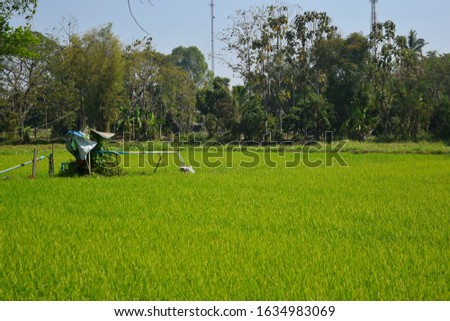 this pic show watering in green rice field by groundwater in rainless area countryside Thailand