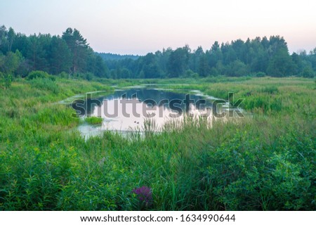 Morning summer photo of a swamp, cloudy sky, open water, red flower in the foreground, light fog #1634990644