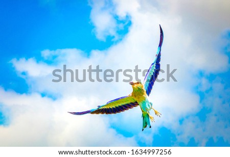 Colorful bird in cloudy sky #1634997256