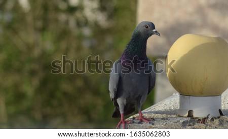 Different Rock Dove Birds Pictures