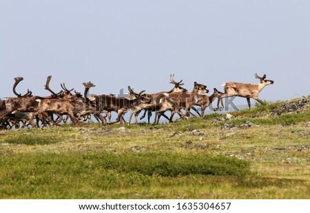 Fortymile Caribou Herd Boundary Alaska Royalty-Free Stock Photo #1635304657