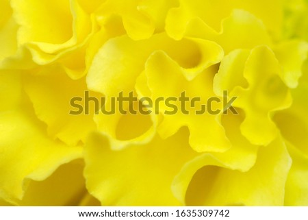 Closeup petal flower. Soft flowers in soft style. Beautiful Flowers on soft sparkle in soft focus with filter colors use for Love and Valentine's Day, wedding and love Concept background. Vintage flow #1635309742