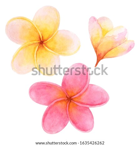 Set of watercolor plumeria flowers isolated on white background. Delicate hand-drawn tropical flowers clip art perfect for cosmetics design, card making and wedding decor.