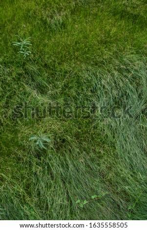 Green grass field in a windy day. #1635558505