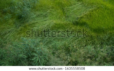 Green grass field in a windy day. #1635558508