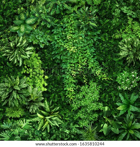 Vegetative background from leaves and plants. Lush, natural foliage. Green vegetation backdrop. Top view of a bed of green plants background. High quality image for professionnal compositing. #1635810244