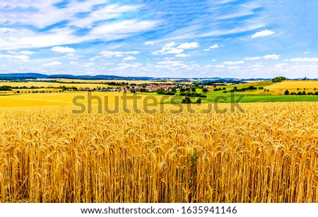 Wheat field agriculture landscape. Agriculture wheat field view. Wheat field landscape. Wheat field #1635941146