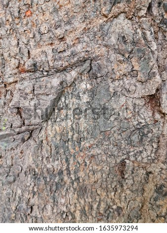 Tree surface  Used as a background surface #1635973294