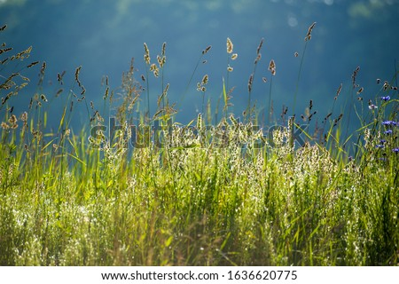 Beauty healthy backgrounds with foliage, green grass and defocused front. #1636620775