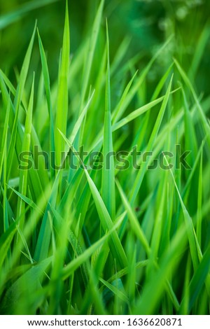 Beauty healthy backgrounds with foliage, green grass and defocused front. #1636620871