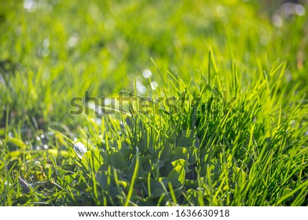 Beauty healthy backgrounds with foliage, green grass and defocused front. #1636630918