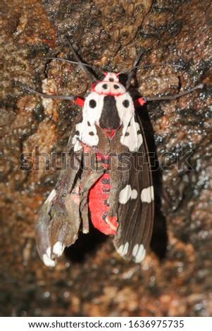 Moth on a tree bark Location: Mumbai